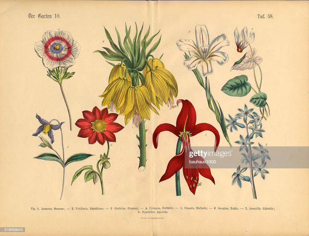 Flowers Of The Garden Victorian Botanical Illustration Stock