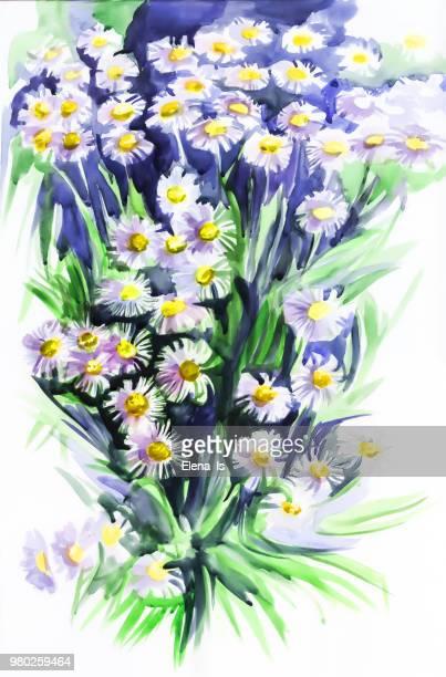 ilustraciones, imágenes clip art, dibujos animados e iconos de stock de margaritas de acuarela de flores - planta de manzanilla