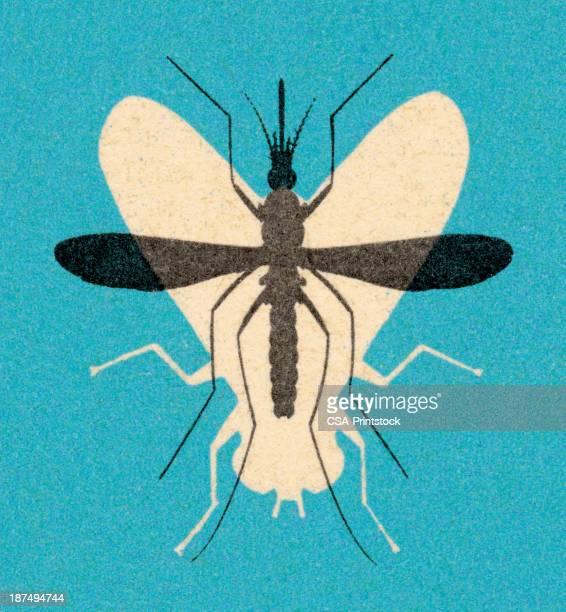 ilustraciones, imágenes clip art, dibujos animados e iconos de stock de fly y los mosquitos - mosquito