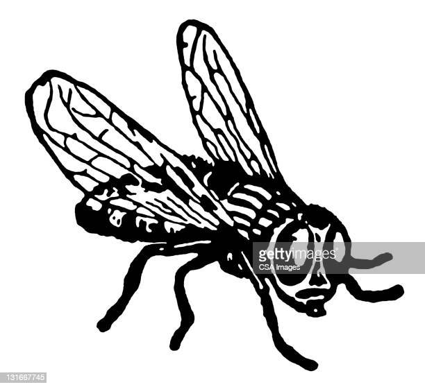 fly - fly insect stock illustrations, clip art, cartoons, & icons