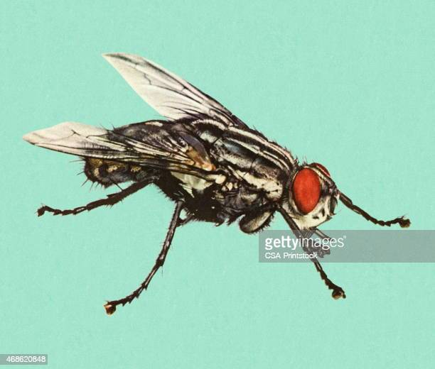 fly on a blue background - fly insect stock illustrations