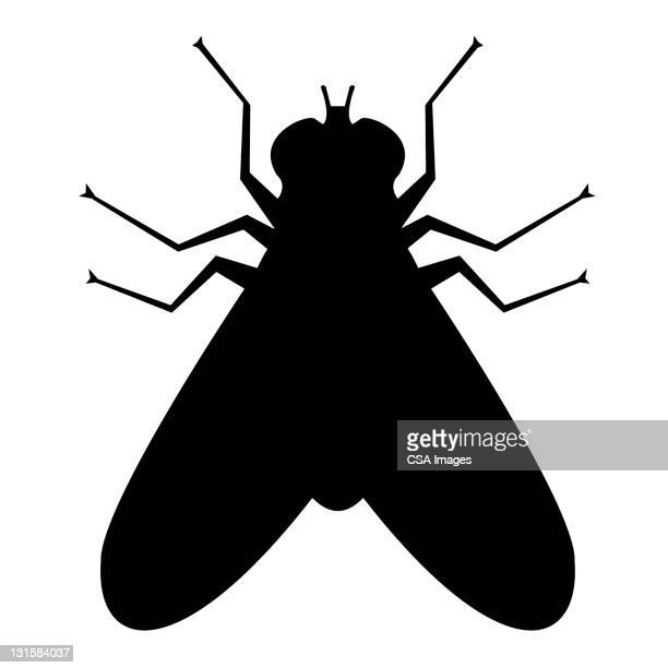 fly silhouette - fly insect stock illustrations, clip art, cartoons, & icons