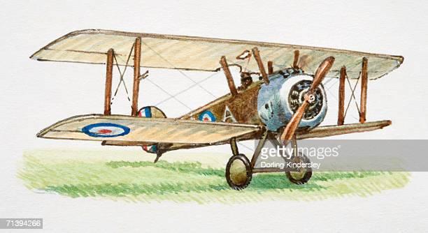 ilustraciones, imágenes clip art, dibujos animados e iconos de stock de flying camel, front view. - primeraguerramundial