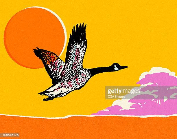 Flying Canadian Goose