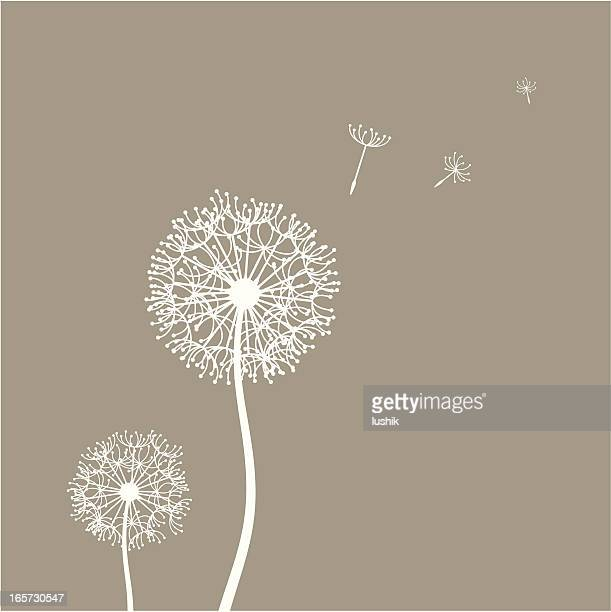 フライングタンポポの種子