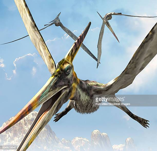 bildbanksillustrationer, clip art samt tecknat material och ikoner med flying pterodactyls searching for food. - paleolitico