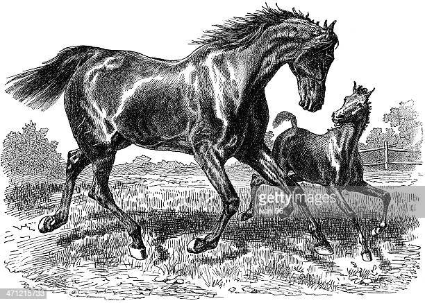 foal and mother - paddock stock illustrations, clip art, cartoons, & icons