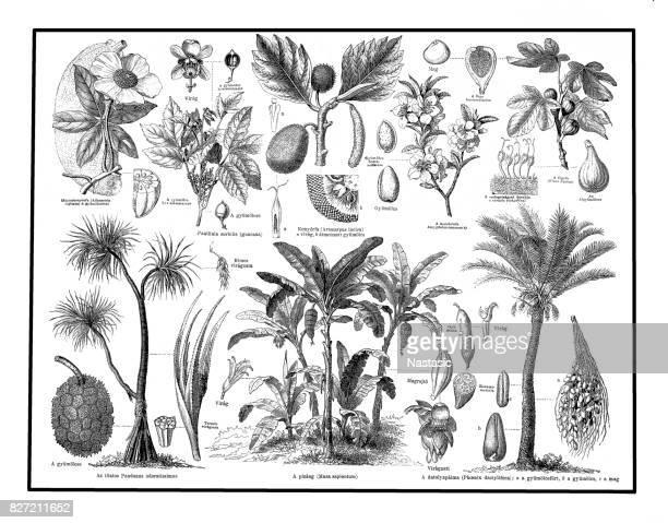 food plants - woodcut stock illustrations, clip art, cartoons, & icons