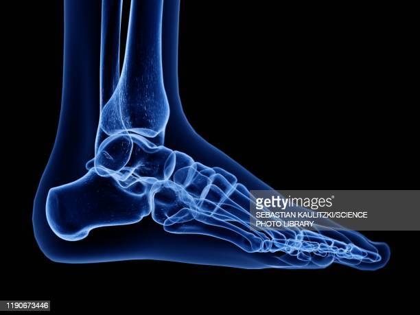 illustrations, cliparts, dessins animés et icônes de foot bones, illustration - partie du corps humain