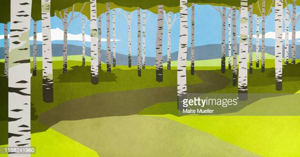 footpath through trees in idyllic forest - silence stock illustrations