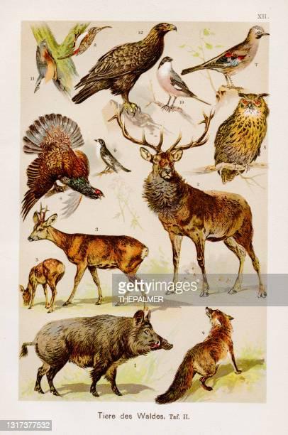 森林動物クロモリソグラフィー 1899年 - 脊椎動物点のイラスト素材/クリップアート素材/マンガ素材/アイコン素材