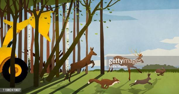 forest animals running from deforestation bulldozer in woods - wildlife stock illustrations