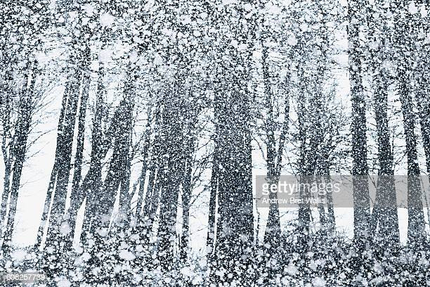 forest caught out in a heavy snow storm. - blizzard stock illustrations
