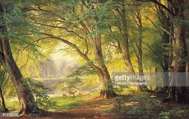 a forest glade - horizontal stock illustrations