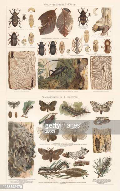 Forest pest: beetles and moth, chromolithograph, published in 1897