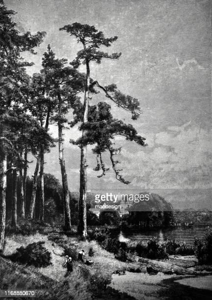ilustrações, clipart, desenhos animados e ícones de cena da floresta - 1887