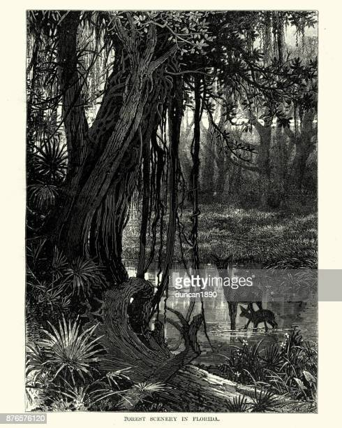 forest scennery in florida, 19th century - southern usa stock illustrations, clip art, cartoons, & icons