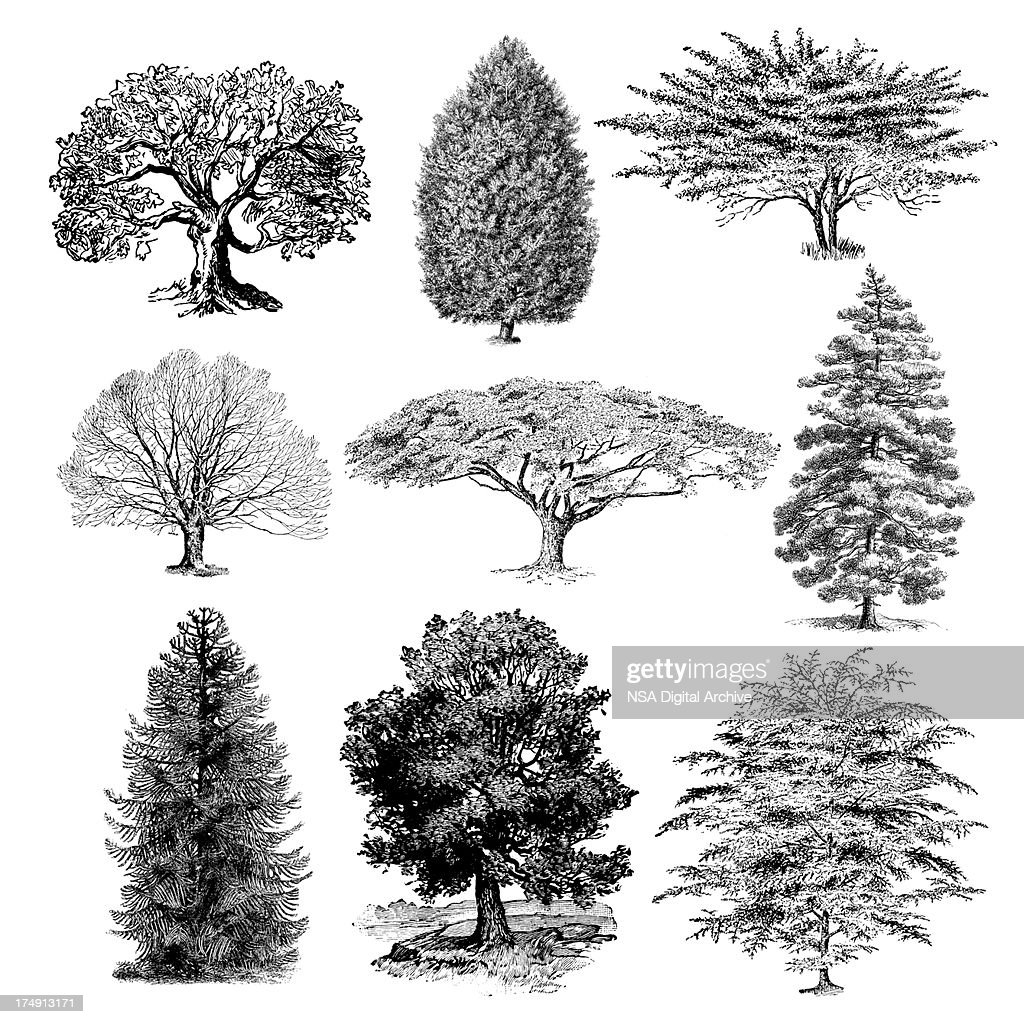 Forest tree illustrations vintage nature clipart stock forest tree illustrations vintage nature clipart stock illustration altavistaventures Image collections