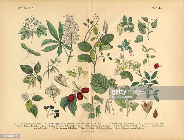 forest trees and plants, victorian botanical illustration - perennial stock illustrations, clip art, cartoons, & icons