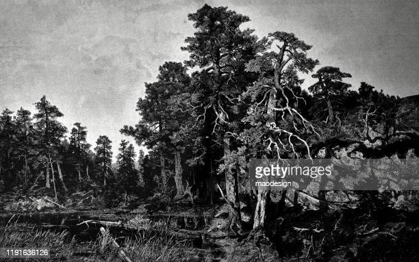 forest with the lake - 1887 stock illustrations, clip art, cartoons, & icons