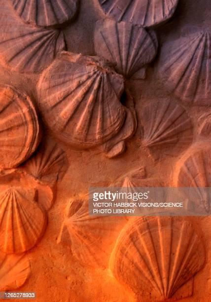fossilised shells, illustration - paleontology stock illustrations