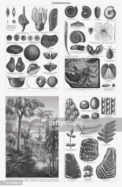 Fossils and plants from the Carboniferous period, woodcuts, published 1897
