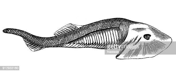 Fossils from the Paleozoic Era ,Eucephalaspis Lyelli (fish)