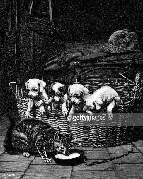 four puppies in basket looking at a milk drinking cat on floor - dog eating stock illustrations, clip art, cartoons, & icons
