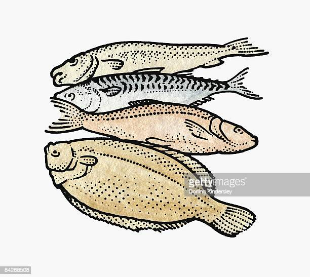 Four raw fish including flounder and trout