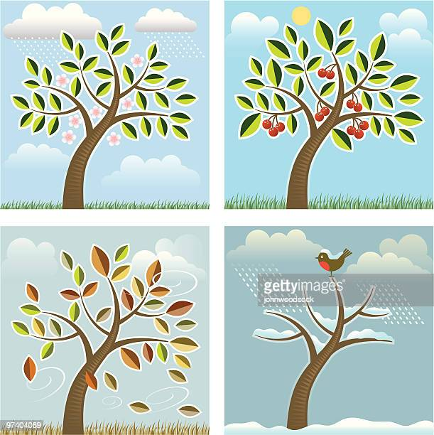 four seasons tree - herbst winter kollektion stock-grafiken, -clipart, -cartoons und -symbole