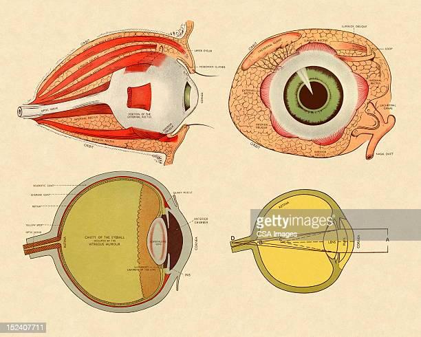 Four Views of Eye