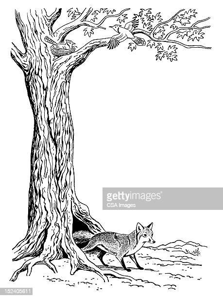 fox and tree - tree trunk stock illustrations, clip art, cartoons, & icons