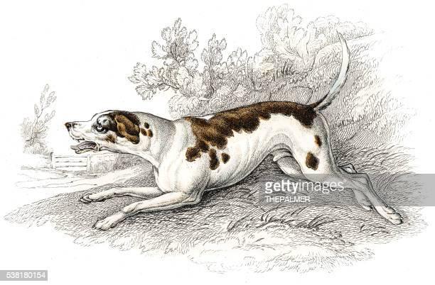 ilustraciones, imágenes clip art, dibujos animados e iconos de stock de fox hound grabado 1840 - galgo