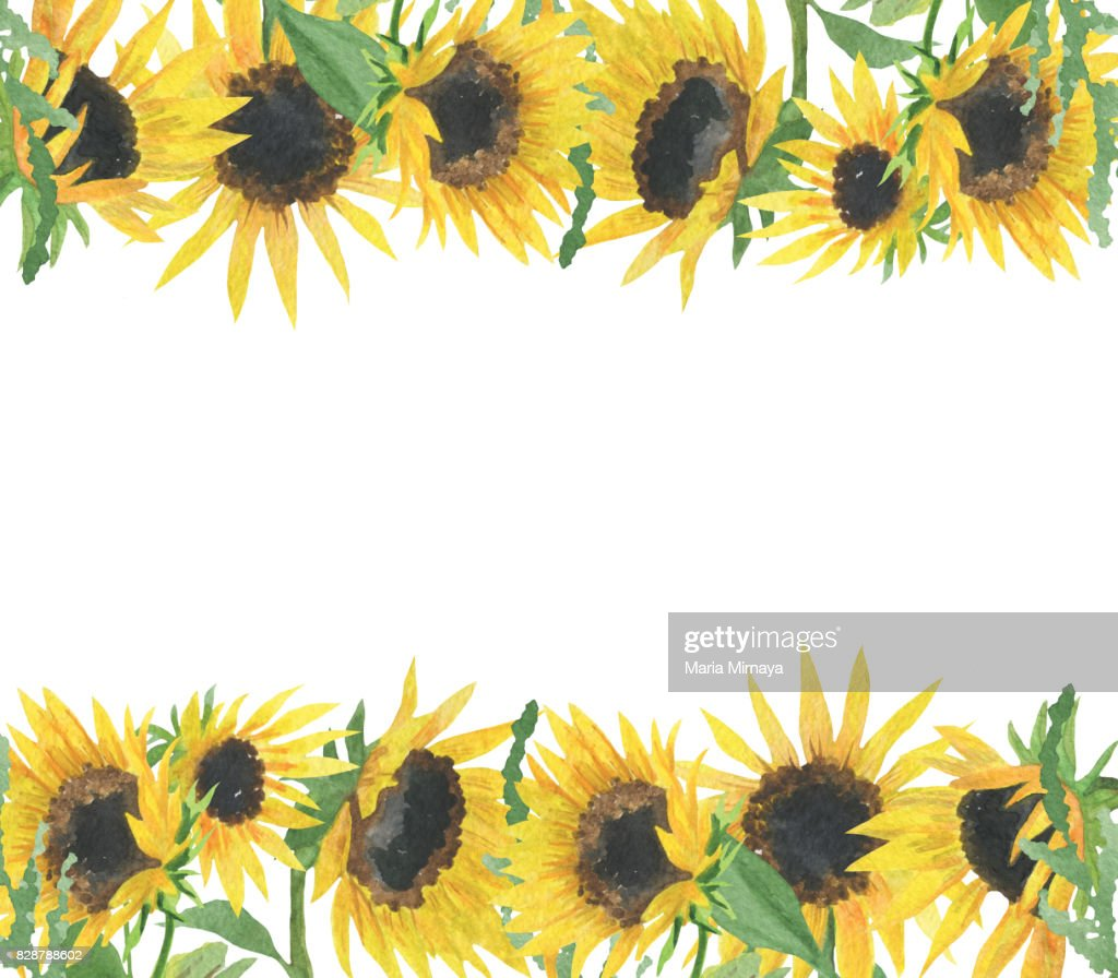 Frame Made Of Handdrawn Watercolor Wild Sunflower Stock Illustration ...