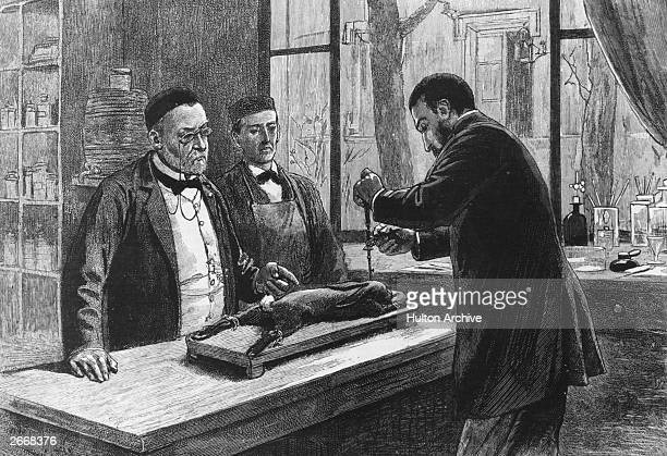 French chemist Louis Pasteur experimenting on a chloroformed rabbit in an investigation into hydrophobia