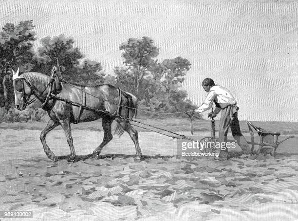 french farmer plowing in 1895 - champagne region stock illustrations, clip art, cartoons, & icons