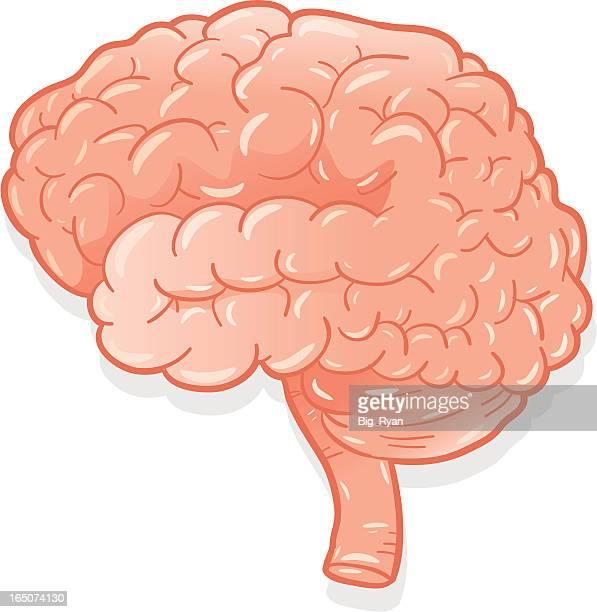 fresh brain - frontal lobe stock illustrations, clip art, cartoons, & icons