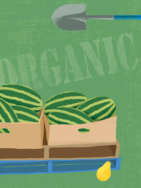 Fresh organic melons illustration