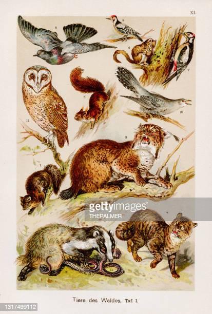 stockillustraties, clipart, cartoons en iconen met zoetwaterdieren chromolithografie 1899 - zoogdier