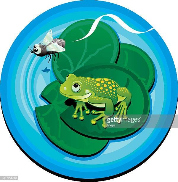 illustrations, cliparts, dessins animés et icônes de grenouille et fly - cigale