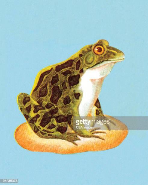 frog - 小型のカエル点のイラスト素材/クリップアート素材/マンガ素材/アイコン素材