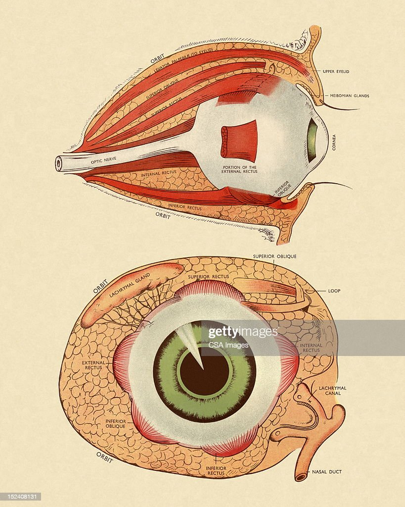Front and side view diagram of eye stock illustration getty images front and side view diagram of eye stock illustration pooptronica Image collections