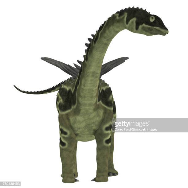 Front view of an Agustinia dinosaur.