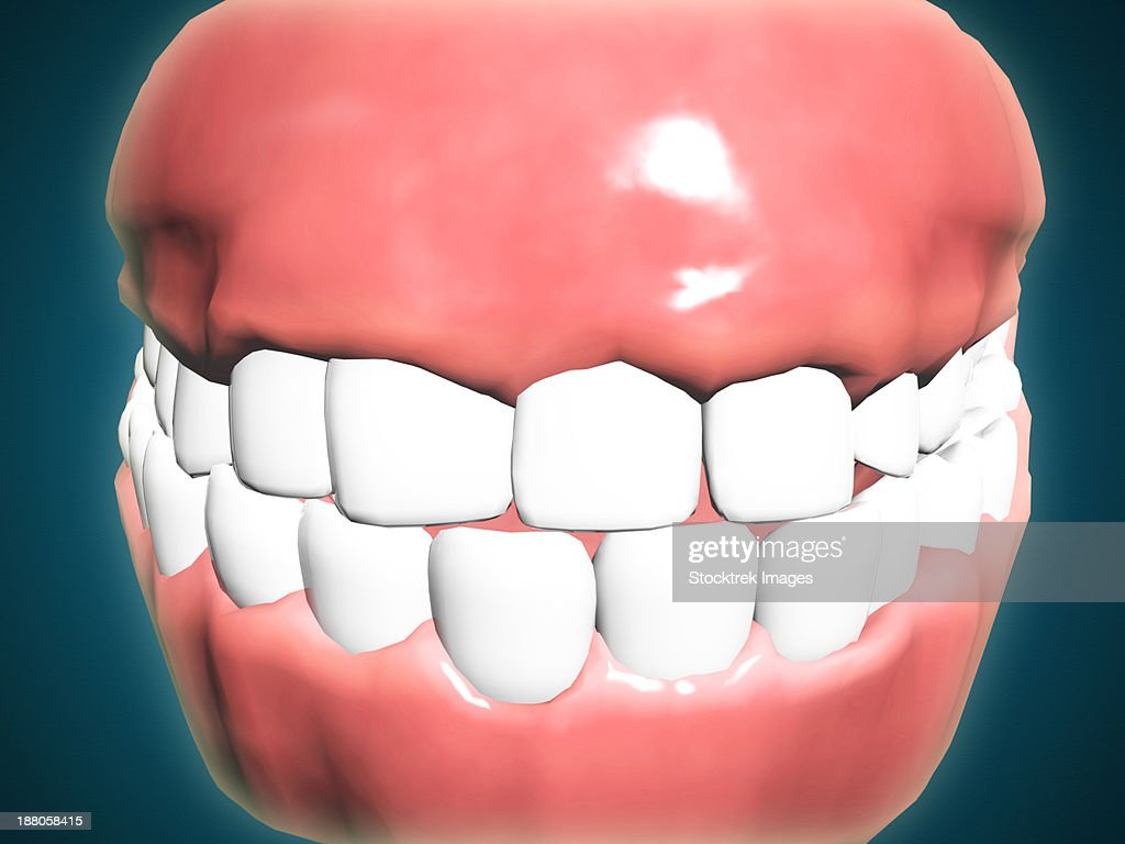 Front View Of Human Mouth With Teeth And Gums Stock Illustration