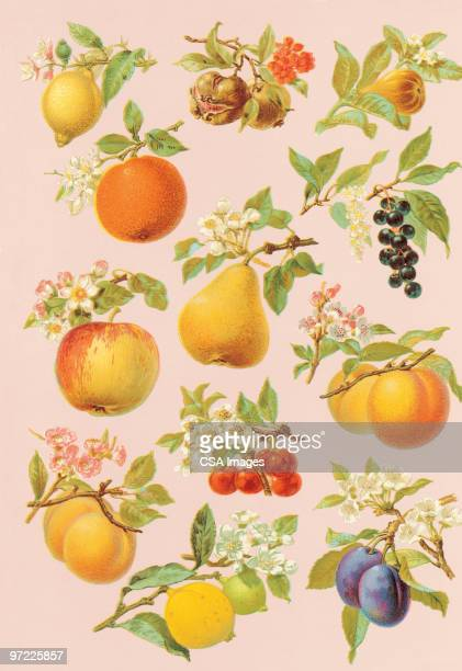 ilustraciones, imágenes clip art, dibujos animados e iconos de stock de fruit on trees and plants - pera