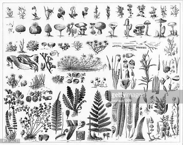 Fungi, Mushrooms, Algae and Non-Flowering Plants