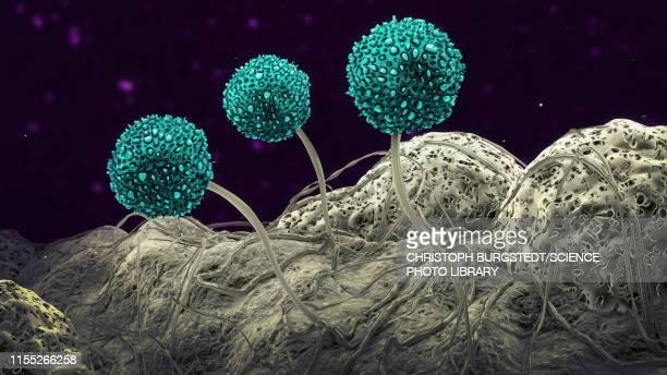 fungus, illustration - spore stock illustrations