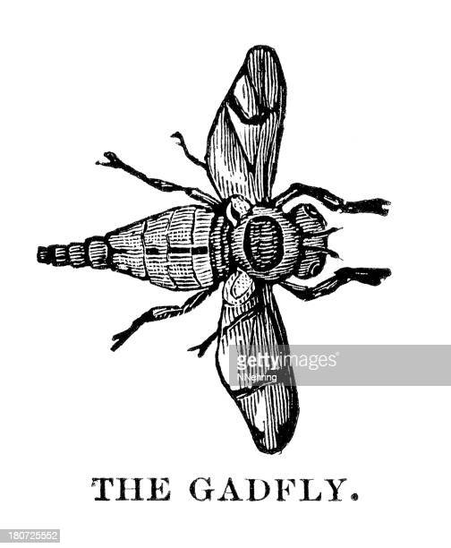gadfly - bot fly stock illustrations