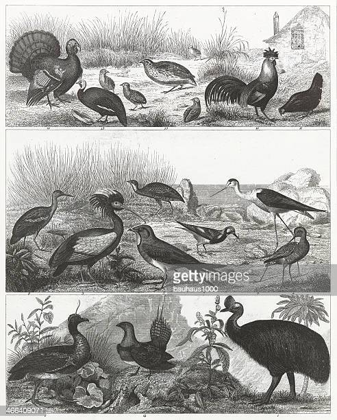 Gamebirds Engraving