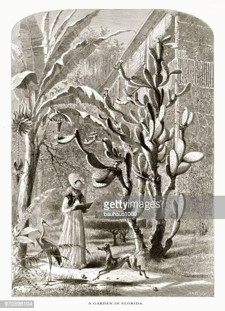 ilustraciones, imágenes clip art, dibujos animados e iconos de stock de jardín en la florida, st. augustine, florida, estados unidos, american victoriana grabado, 1872 - galgo